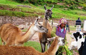 Departamento de Cusco