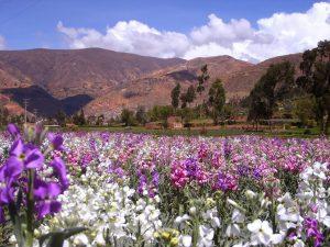 Primavera en Tarma, Perú.